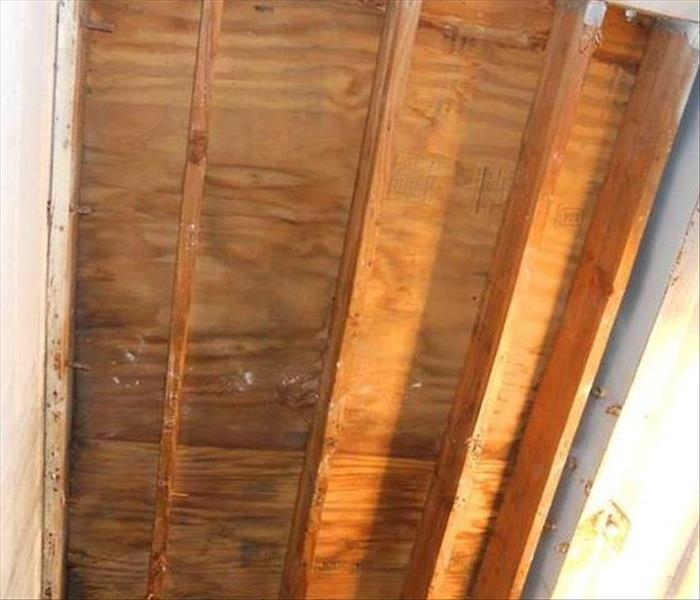 Residential mold damage After